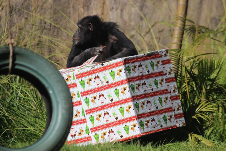 Los animales del Zoológico recibieron sus regalos navideños. (Foto: Facebook/Zoológico)