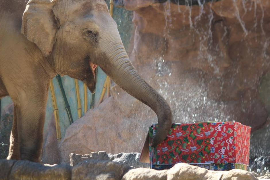 Dentro de las cajas de regalo había parte de la dieta habitual de los animales. (Foto: Facebook/Zoológico)