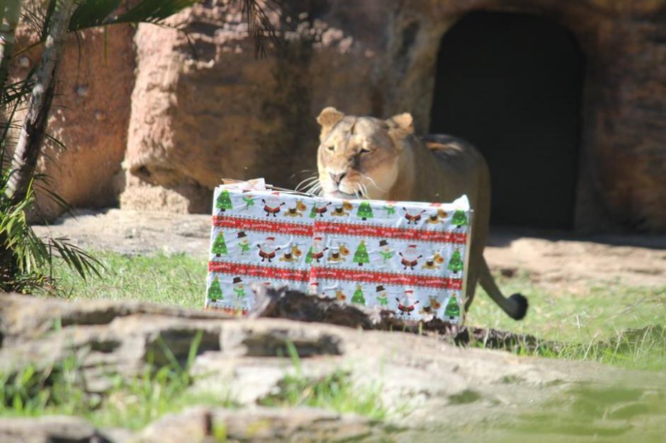 Desde hace seis años realizan esta actividad en el Zoológico. (Foto: Facebook/Zoológico)