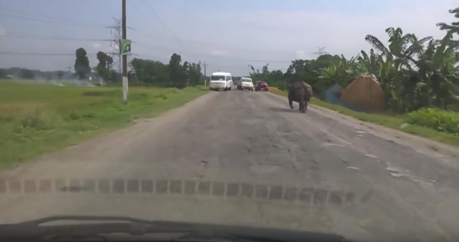 Las imágenes del rinoceronte se viralizan en las redes sociales. (Captura de pantalla: Just Video)