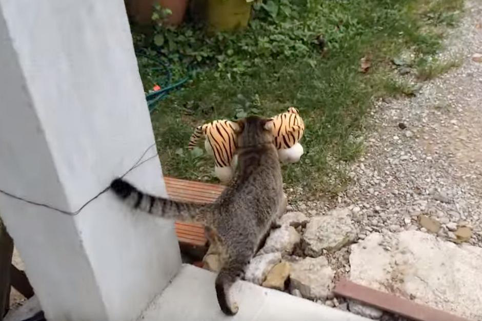 El gato camina para llevar el peluche a su jardín.(Foto: YouTube)