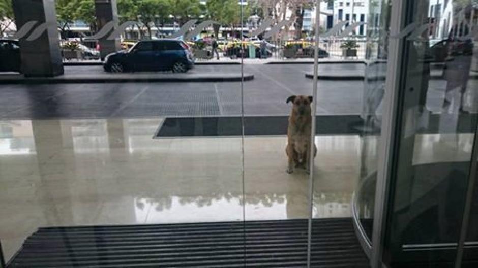 Cuando Olivia se iba, el perro desaparecía. (Foto: Facebook/Olivia Sievers)
