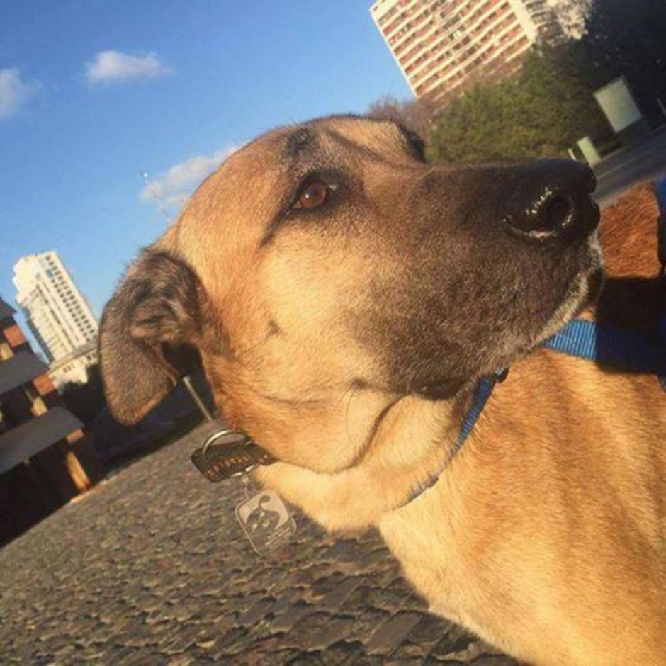 El perro esperaba a la azafata en las afueras del hotel donde se hospedaba. (Foto: Facebook/Olivia Sievers)