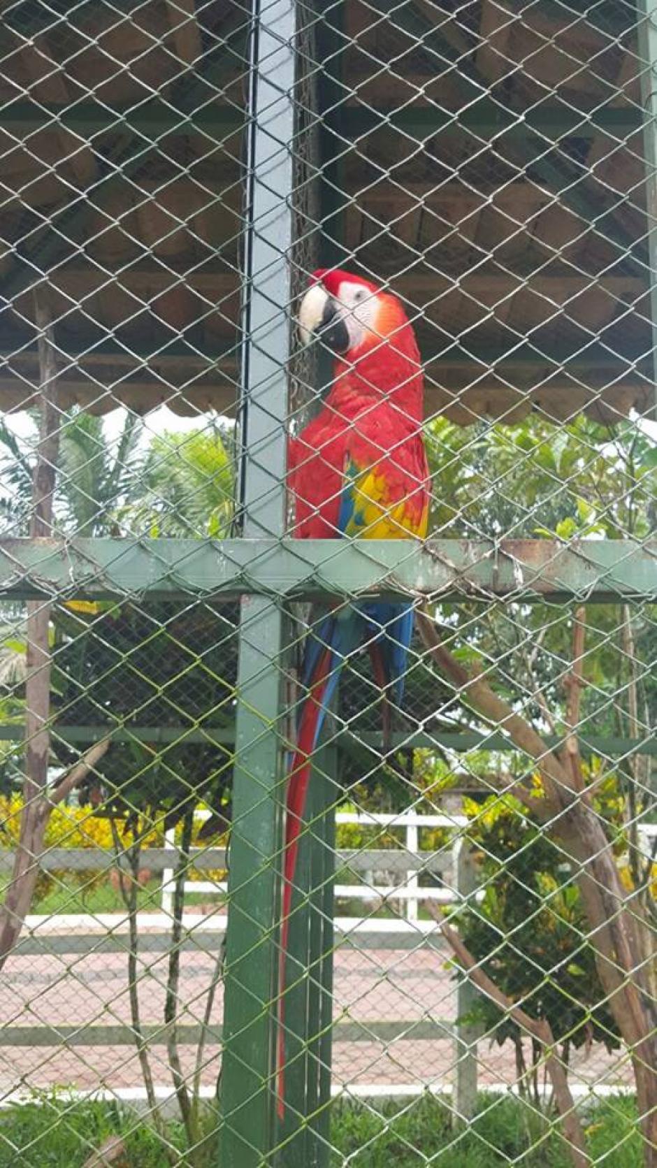 Esta guacamaya también fue decomisada durante el allanamiento. (Foto: Policía Nacional Civil (PNC)