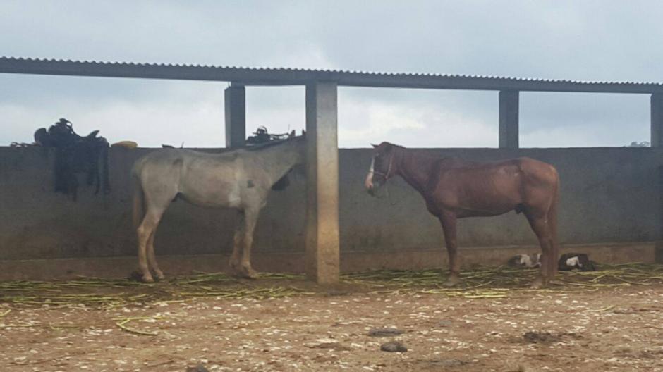 Las autoridades también incautaron caballos y una guacamaya. (Foto: Policía Nacional Civil (PNC)
