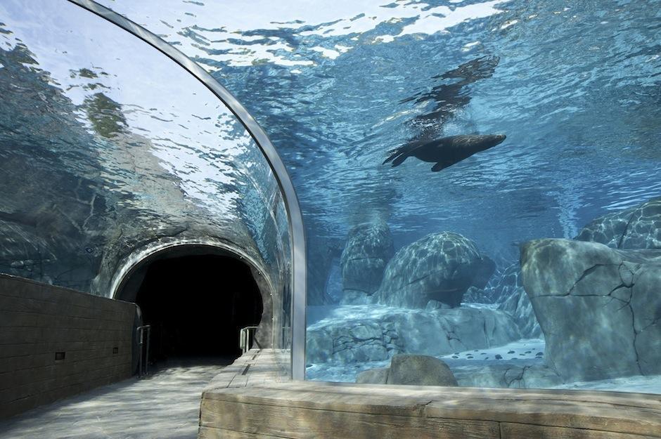 En zoológico de San Luis, en Misuri, Estaods Unidos tiene 19,800 animales salvajes, recibiendo 3 millones de visitas al año. (Foto: stlzoo.org)