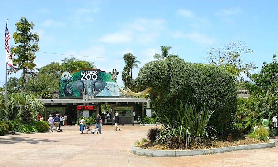 El Zoológico de san Diego, en California, cuenta con 100 acres donde hay 650 especies de animales, 3,700 habitantes en total. (Foto: Wikipedia)