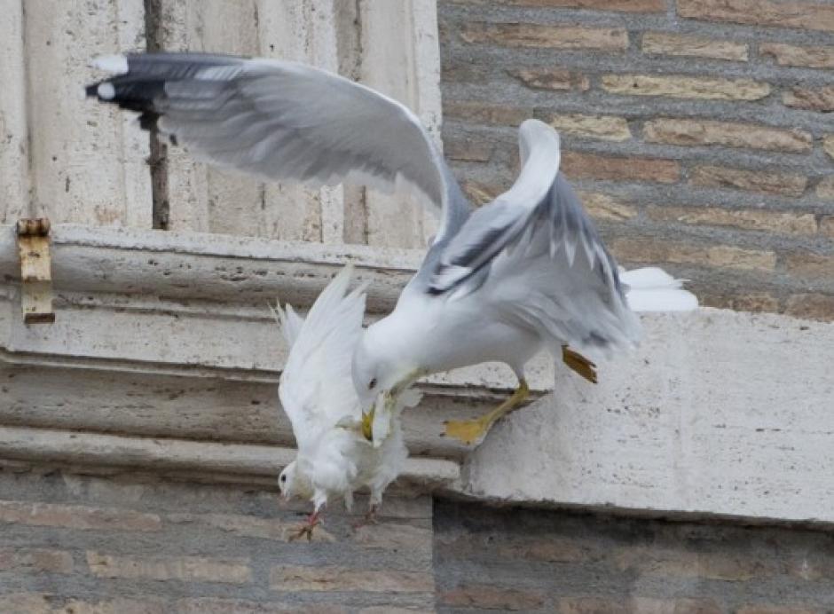 La paloma fue liberada por el Sumo Pontífice luego de orar por la paz en Ucrania. (Foto: 20minutos.es)
