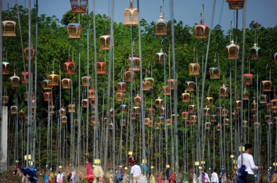 Jaulas colgantes para aves son colocadas sobre postes durante el concurso de aves cantoras en el distrito de Rueso, en la provincia sureña de Narathiwat, en Tailandia, en el que cientos de dueños de aves tailandeses, participan en el tradicional concurso anual. (Foto: AFP)