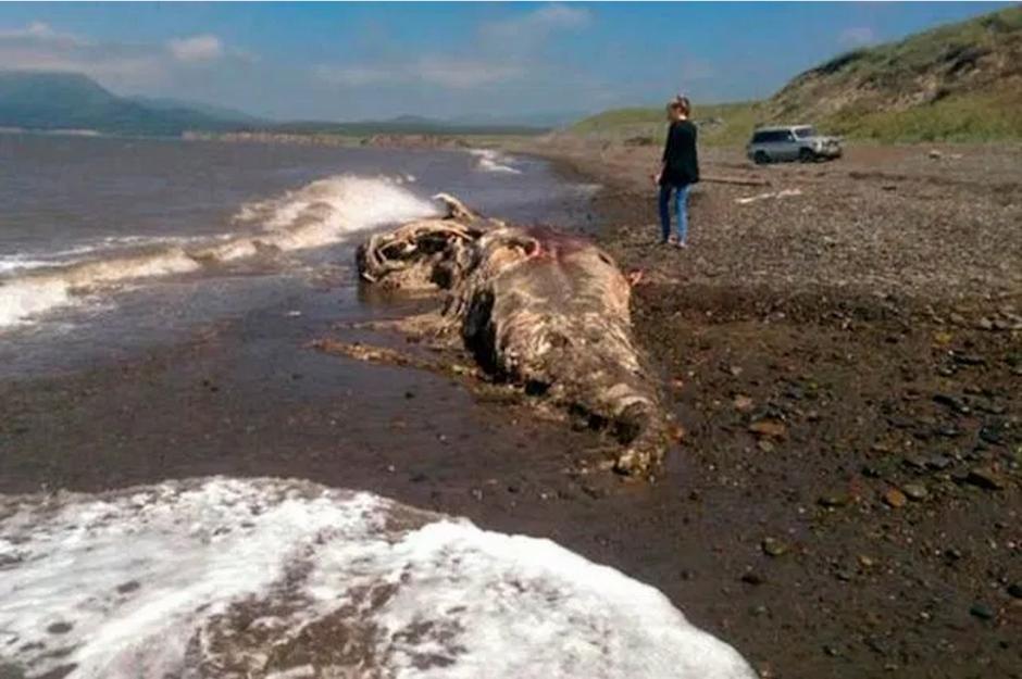 La criatura apareció en las costas de Rusia.