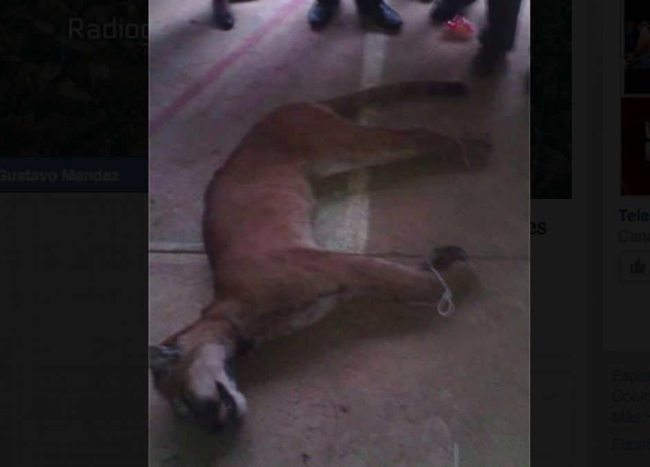 El animal fue atado y golpeado antes de ser brutalmente asesinado. (Foto: Conap)