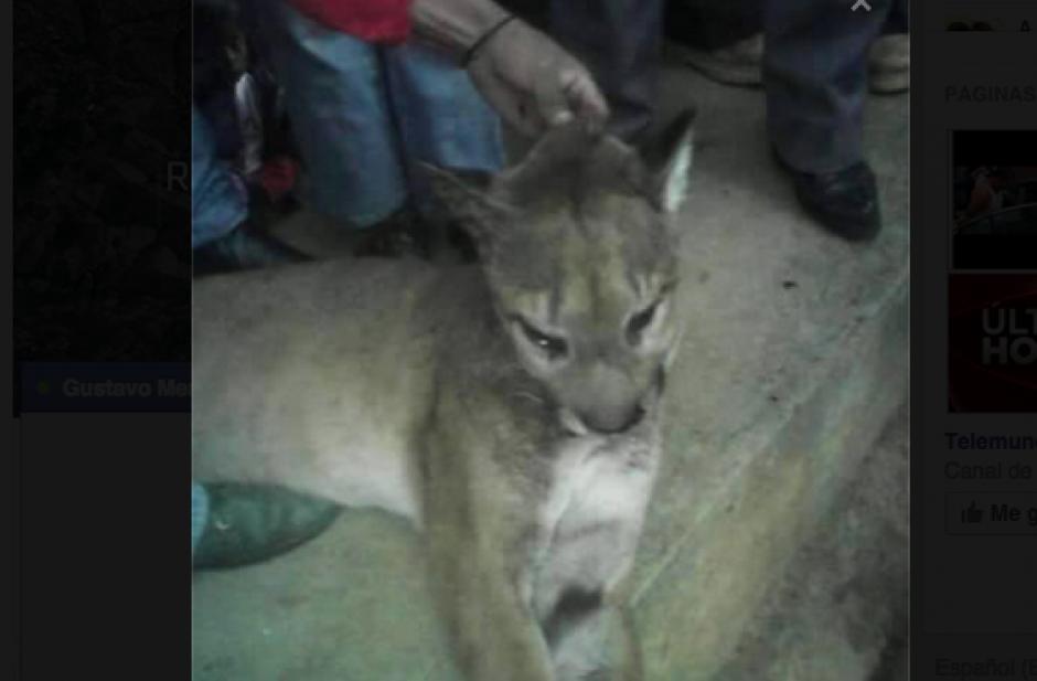 Las personas muestran la forma en que torturan al animal hasta matarlo. (Foto: Conap)