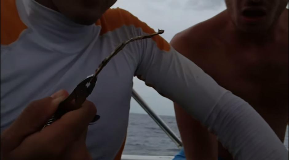 Los voluntarios lograron retirarle una pajilla plástica de unos 12 centímetros de la nariz a la tortuga.(Captura YouTube)