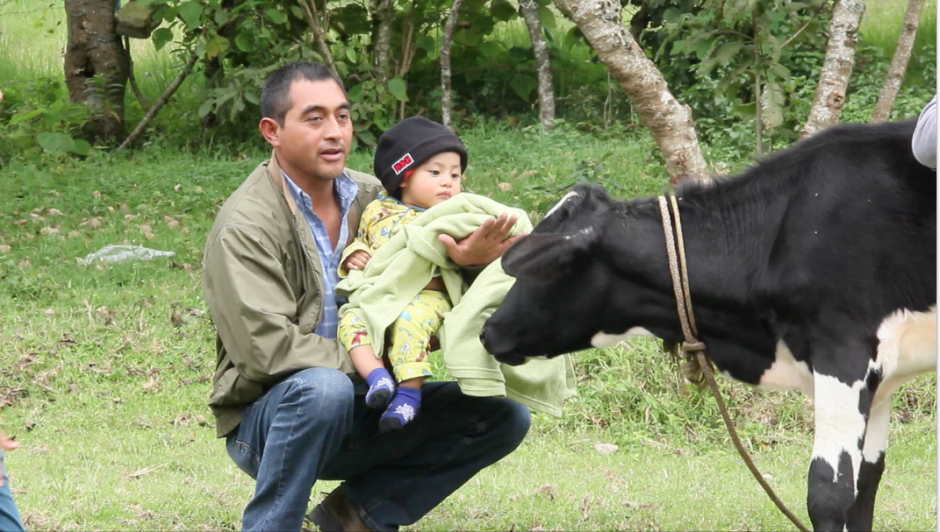 En la finca de Laguna Bermeja, las personas piensan que es un terreno inseguro por ser inclinado. Algunos aprovecharon para fotografiarse con las vacas que se encontraban en el lugar.(Foto: Fredy Hernández/Soy502)