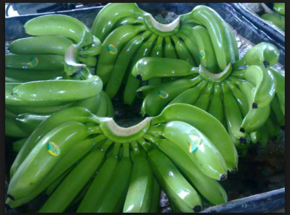 Un nuevo virus destruye los cultivos de banano de la variedad Cavendish. Científicos buscan una solución a tiempo, pero se muestran pesimistas. (Foto: delina.hu)