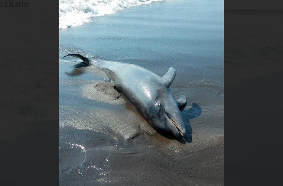 El animal murió en horas de la tarde del miercoles 2 de diciembre. (Foto: Ángel Revolorio/Nuestro Diario)