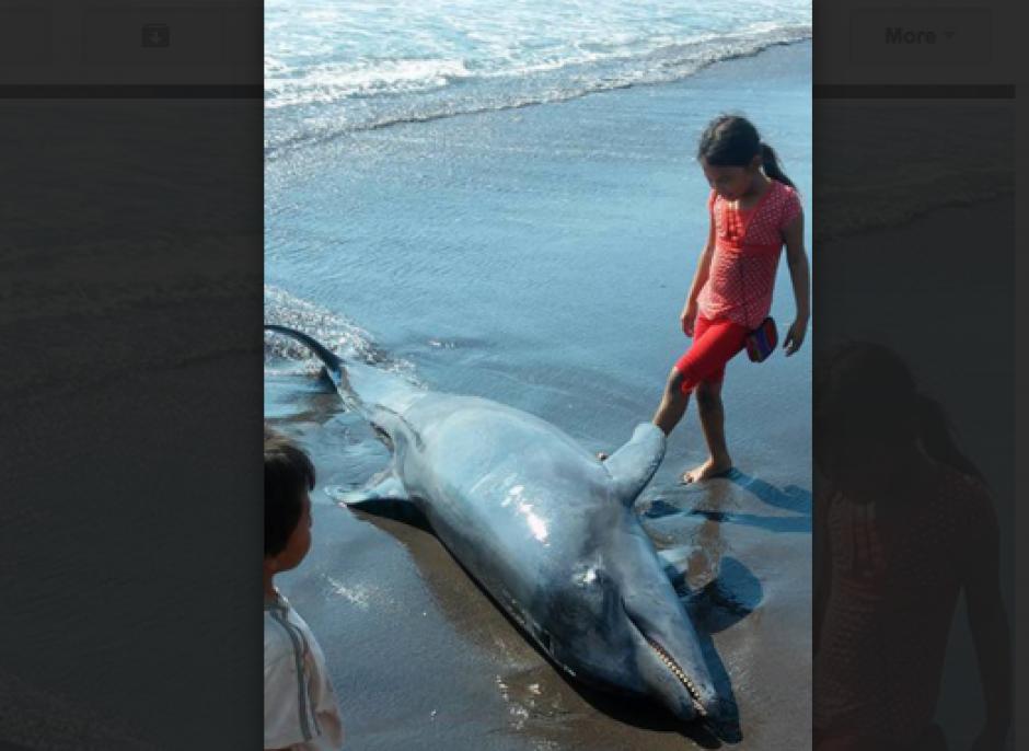 Los niños fueron los que más se acercaron al cuerpo del delfín. (Foto: Ángel Revolorio/Nuestro Diario)