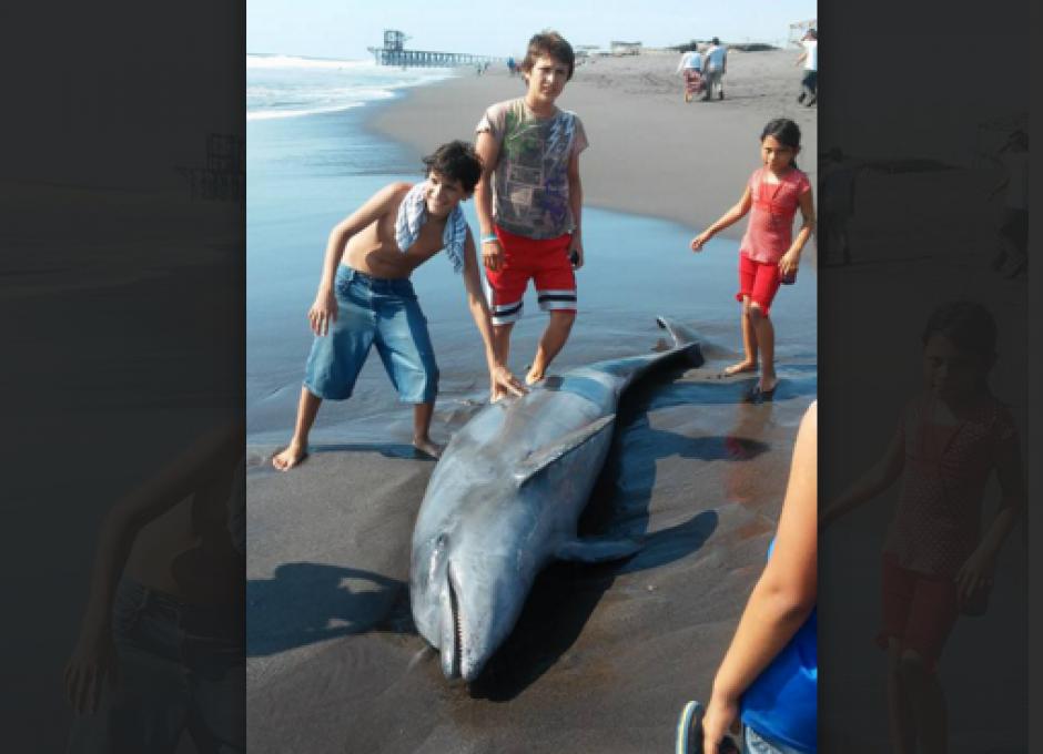El cadaver de un delfín en las Playas de Champerico llamó la atención de los lugareños. (Foto: Ángel Revolorio/Nuestro Diario)