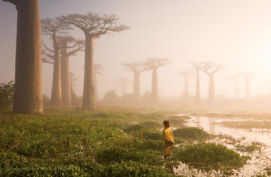 Madre de la selva, muestra a una mujer junto a unos árboles Baobab en Madagascar. (FotoMarsel van Oosten/National Geographic)