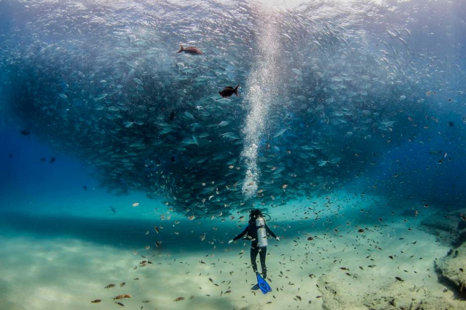 En un parque marino en el Cabo Pulmo, de Baja California, México, fue captada esta imagen denominada todos los peces en el mar. (FotoJeff Hester/National Geographic)