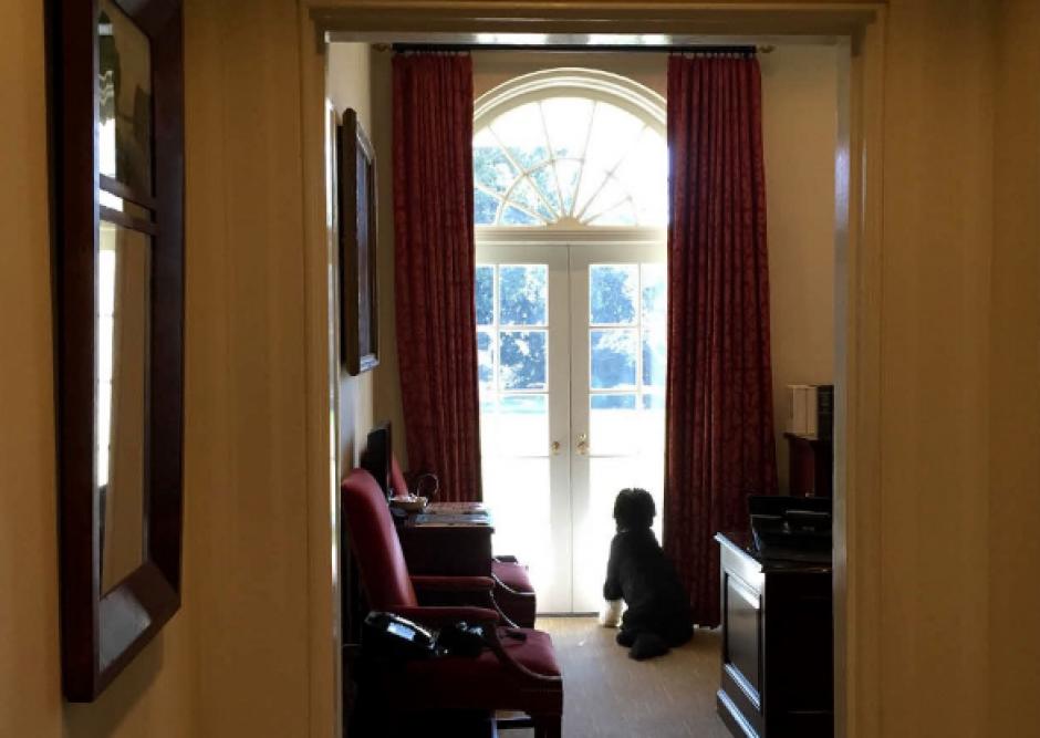 Uno de los perros de Barack Obama en la Casa Blanca. (Foto: @PeteSouza)