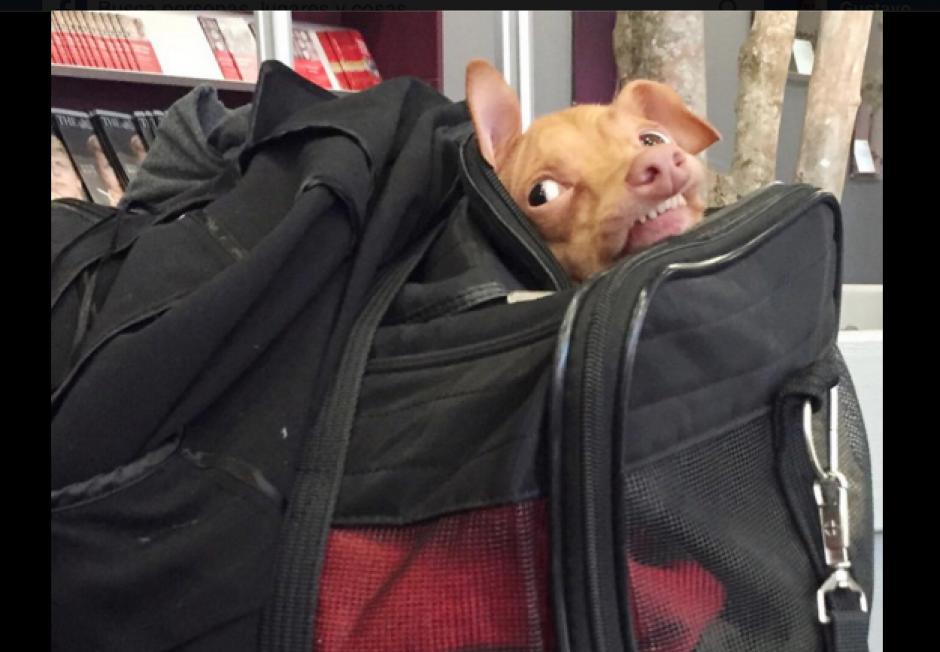 El perro ha sido utilizado para diferentes memes.(Foto: Facebook/Tuna)