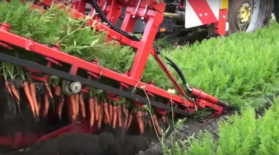 La impresionante uniformidad para recolectar las zanahorias. (Imagen: Captura de YouTube)