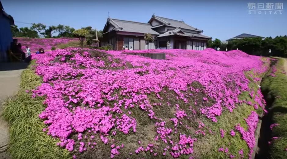 Las flores regalan un hermoso aroma al lugar.  (Foto: Captura de YouTube)