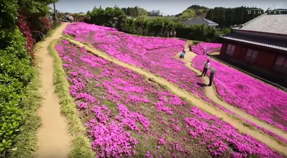 Miles de olorosas flores adornan el patio de la vivienda de los Kuroki. (Foto: Captura de YouTube)