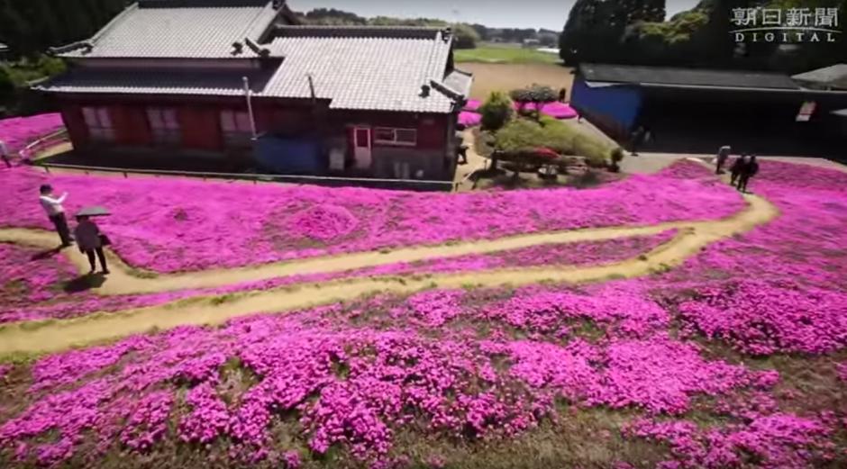 El señor Kuroki logró animar a su esposa al regalarle un hermoso jardín. (Foto: Captura de YouTube)