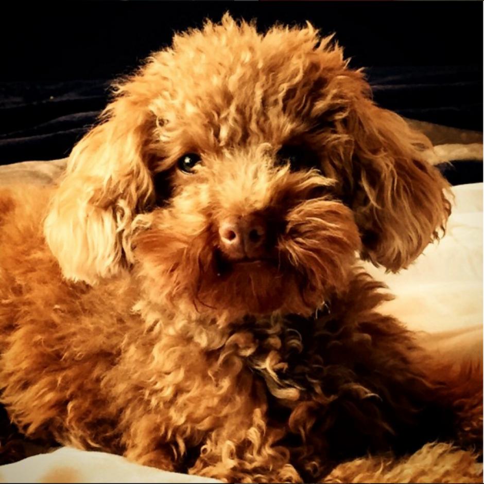 Antonella publica frecuentemente imágenes de Toby en Instagram. (Foto: Instagram/antoroccuzzo88)
