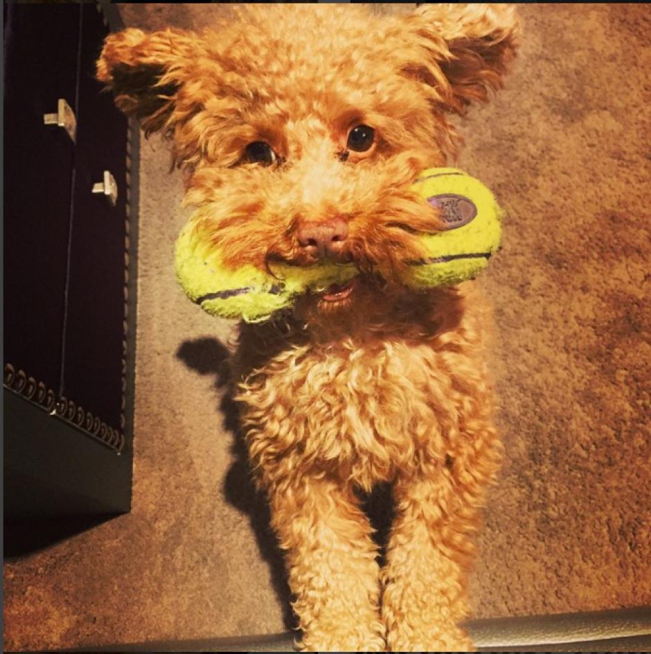 Toby lleva más tiempo compartiendo el hogar de la familia Messi. (Foto: Instagram/antoroccuzzo88)