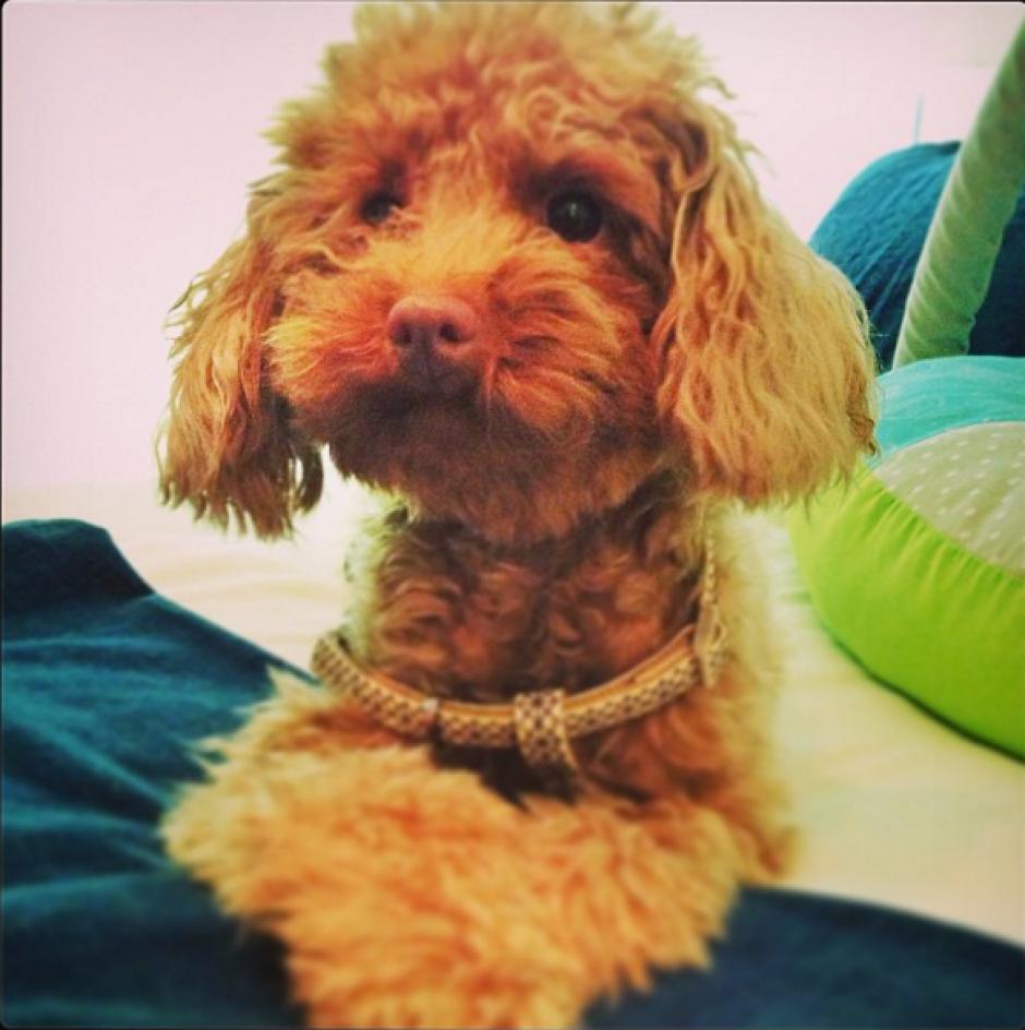 Al parecer, a Toby le encanta posar para la cámara. (Foto: Instagram/antoroccuzzo88)