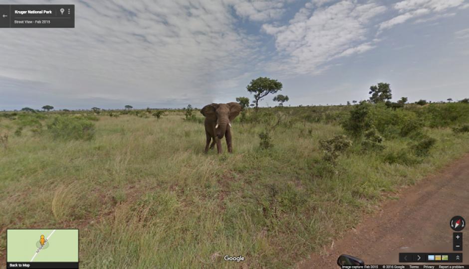 Google Street View te permite dar un paseo por un safari en Sudáfrica. (Foto: google)