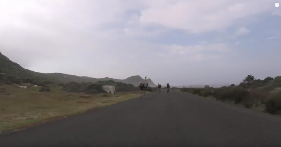 Los ciclistas pedalean más rápido al percatarse del ave. (Imagen: Oleksiy Mishchenko/YouTube)
