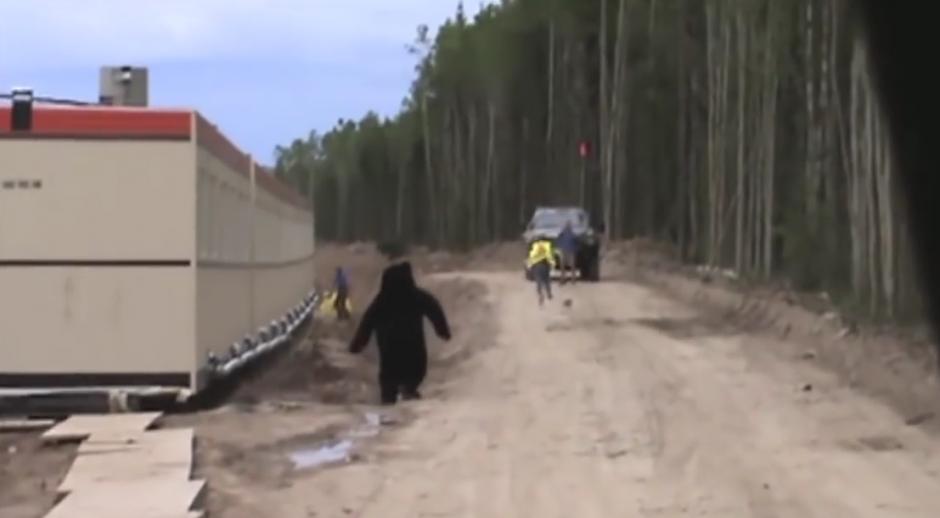 Al ver al oso el hombre corre a toda prisa para resguardar su vida. (Imagen: Czubson Tommy)