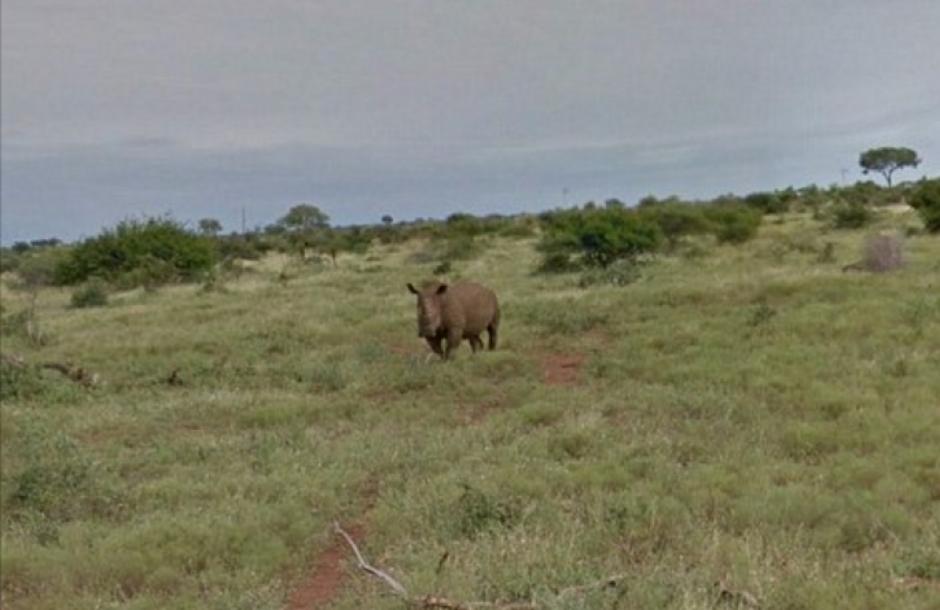 También se pueden ver rinocerontes. (Foto: Google)