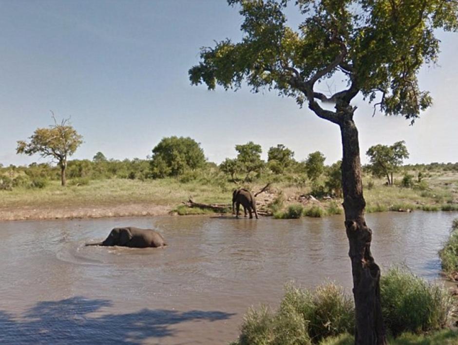 Una familia de elefantes se refrescan. (Foto: Google)