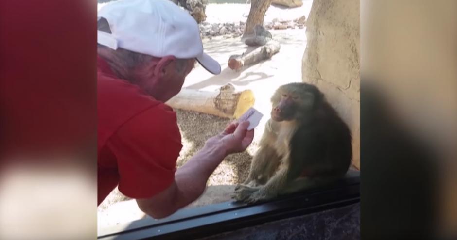 Un babuino mira con atención la mano de un hombre. (Foto: America's Funniest Home Videos/YouTube)