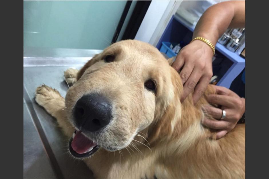 El perro sufrió una inflamación por el piquete. (Foto: Facebook/Natthathida Nilbut)