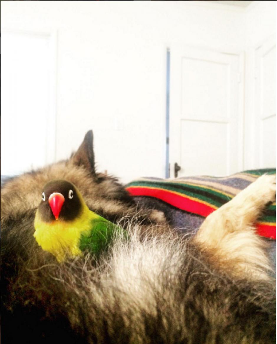 Noir el ave y el perro Jackson, son amigos inseparables. (Imagen: Instagram/wolfspitzen)