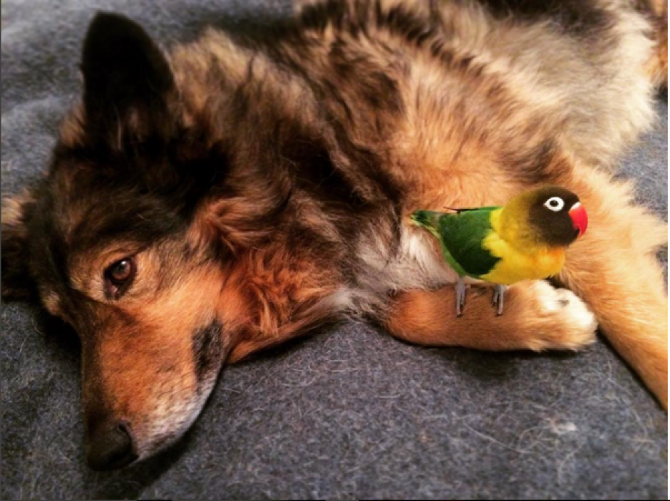 Jackson y Noir, incluso hacen juntos la siesta. (Imagen: Instagram/wolfspitzen)