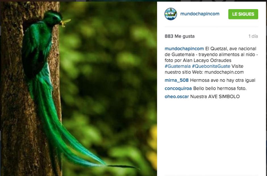 """""""Mundo Chapin"""" nos sorprende con fotografías espectaculares, como este quetzal. (Captura Instagram Mundo Chapín)"""