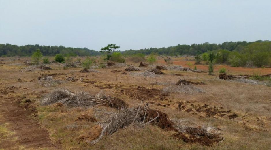 Las plantaciones fueron colocadas de forma irregular. (Foto: Conap)