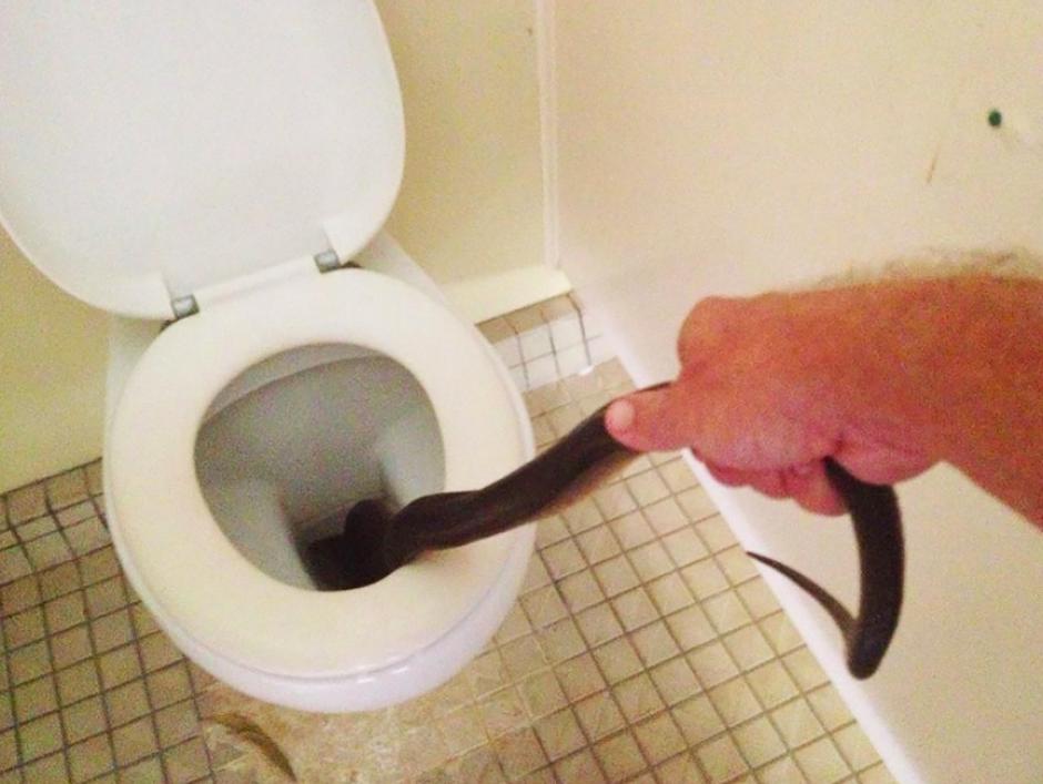 A pesar de haber sido extraída con fuerza la serpiente no quería salir. (Foto: Facebook)