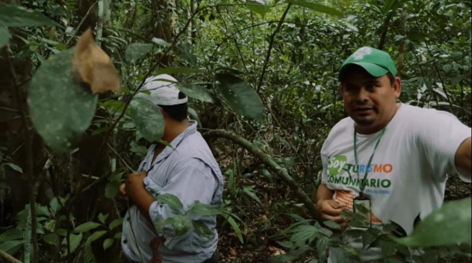 Los comunitarios hablaron sobre las amenazas que sufren varias especies de árboles por sus usos variables. (Captura YouTube)