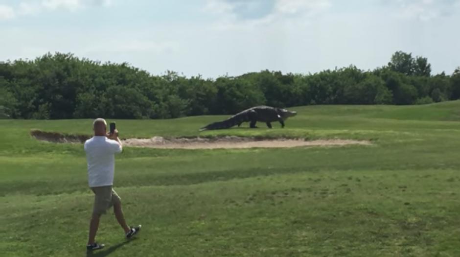 Uno de los jugadores graba al cocodrilo mientras se pasea por el campo. (Foto: Tomado de YouTube)