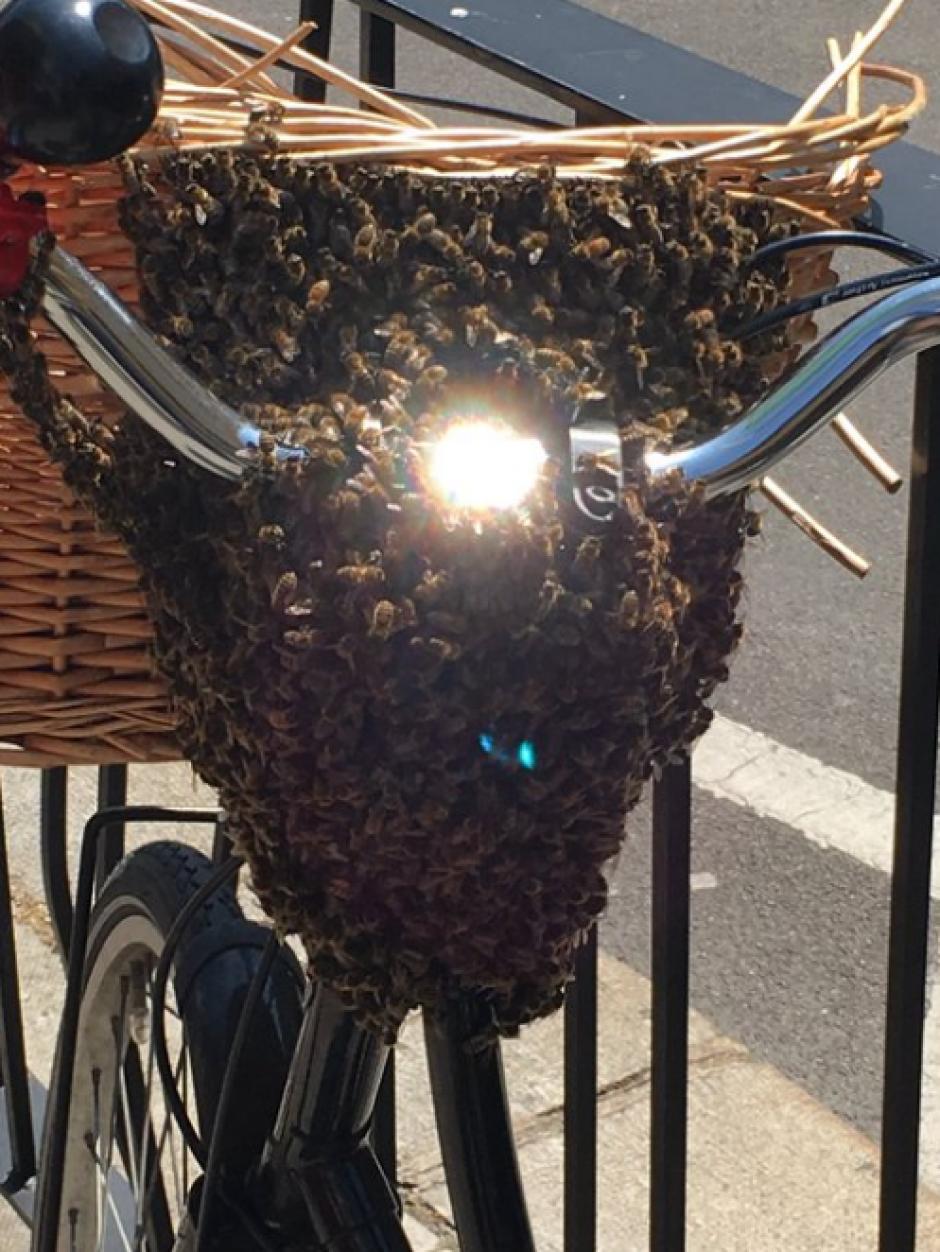 En Chicago ocurrió un caso similar donde las abejas se apoderaron de la canasta de una bicicleta. (Foto: Twitter)