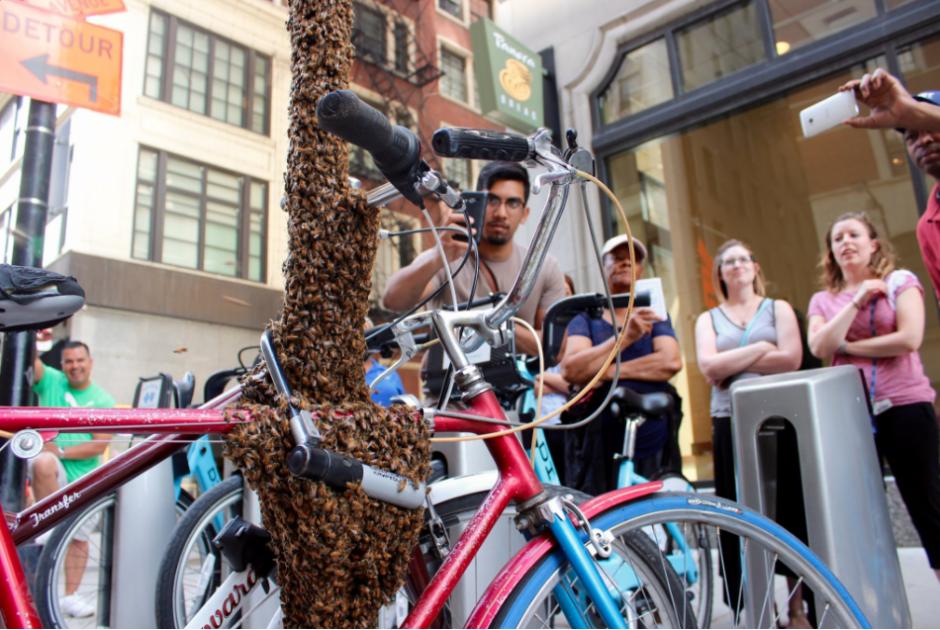 Cientos de británicos observan con asombro a las abejas. (Foto: Twitter)