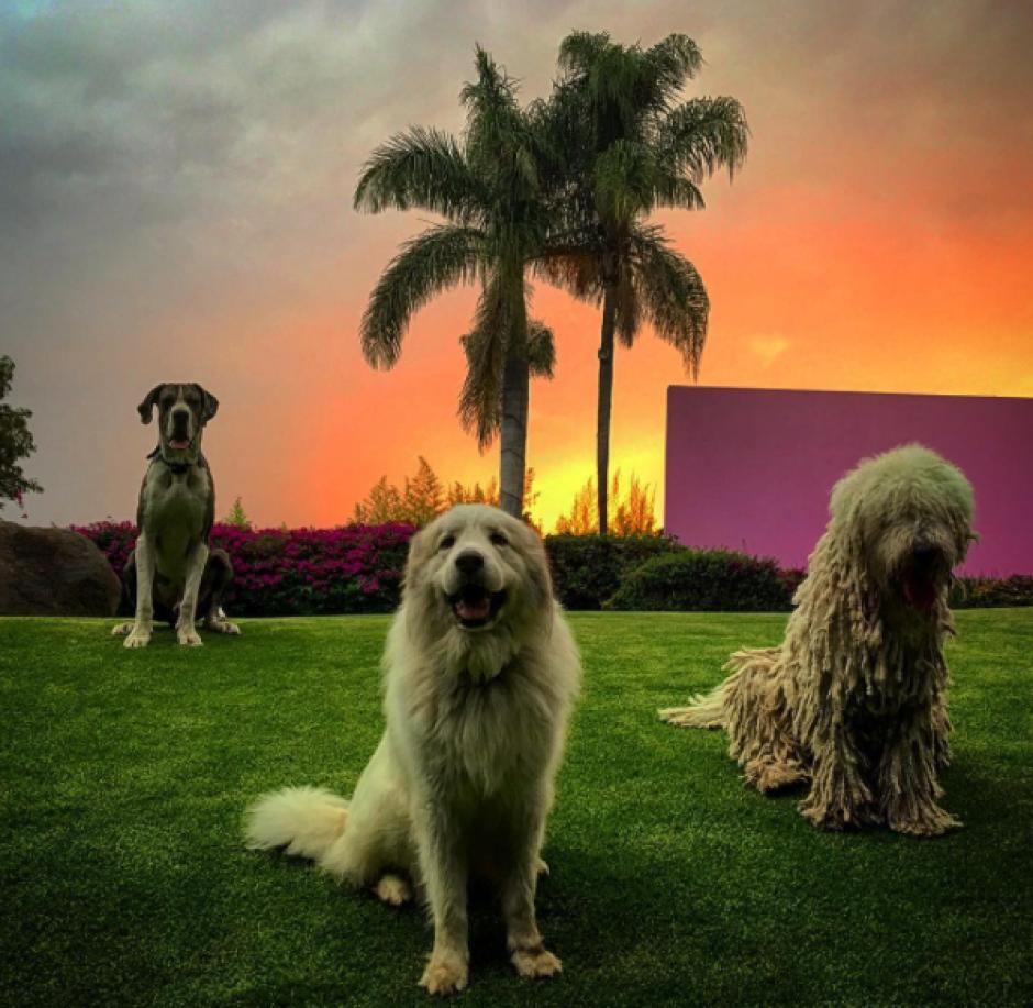 """""""Estos son mis guardianes"""", escribió """"El Potrillo"""" al subir esta imagen. (Foto: Instagram)"""